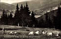 Postcard Warmensteinach Oberfranken Bayern, Blick vom Geiersberg, Kuhherde