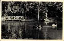 Postcard Offenburg im Schwarzwald Ortenaukreis, Partie in den Zwinger Anlagen, Schwan