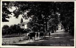 Postcard Philippsthal an der Werra, Blick auf den Vachaer Weg, Rinder, Kirchturm
