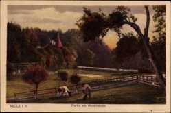 Postcard Melle in Niedersachsen, Partie am Waldmeister, Kühe, Zäune