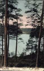 Postcard Dorf Zechlin Rheinsberg, Blick durch die Bäume auf den Wumsee