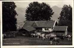 Postcard Fischbachau Leitzach Oberbayern, Schwaigeralm bei Birkstenstein, Kühe