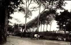 Foto Ak Singapur, Straßenansicht, Kühe, Kutschen, Palmen
