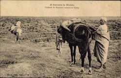 Postcard Marokko, Cadavre de Marocain ramene au Camp, Pferd, toter Marokkaner