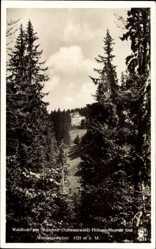 Postcard Todtnau im Südschwarzwald Kreis Lörrach, Waldhotel am Notschrei
