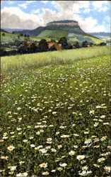 Ak Vegetationsbilder, Sächs. Schweiz, Nenke und Ostermaier 512 825, Margeriten
