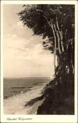 Postcard Ostseebad Heiligendamm, Strandpartie, Waldrand