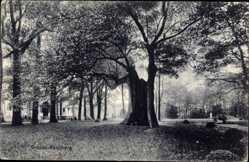 Postcard Rüenberg Gronau im Münsterland Westfalen, ausgehöhlter Baum