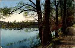 Postcard Wandlitz im Kreis Barnim, Landschaft, Gewässerpartie, Vegetation, Weg