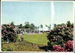 Postcard Hamburg Mitte, Gartenbau Ausstellung 1953, Rhododendren, Wasserspiel