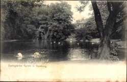 Postcard Hamburg Eimsbüttel Stellingen, Zoologischer Garten, Teich, Pelikan