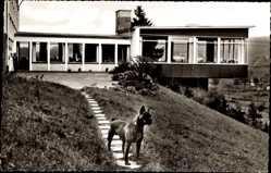 Postcard Wildbergerhütte Reichshof Oberberg Kreis, Fritz Schulte Heim, Boxer