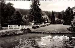 Postcard Elfenborn Kalletal in Nordrhein Westfalen, Blumenpark, Enten