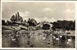 Postcard Hamburg Stellingen, Carl Hagenbecks Tierpark, Vogelteich, Afrikanische Steppe