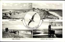 Postcard Hörnum auf der Insel Sylt, Weststrand, Abend, Oststrand, Möwe