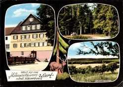 Postcard Wart Altensteig im Kreis Calw, Gasthaus zum Hirsch, Eugen Klotz