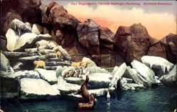 Postcard Hamburg Stellingen, Carl Hagenbecks Tierpark, Nordland Panorama