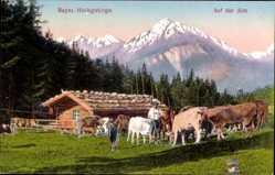 Ak Bayerisches Hochgebirge, Auf der Alm, Kühe, Hirte, Alpen