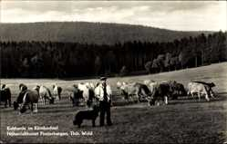 Postcard Finsterbergen Friedrichroda Thüringen, Kuhherde im Körnbachtal