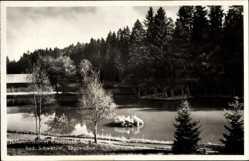 Postcard Königsfeld im Schwarzwald Baar Kreis, Partie am Sägeweiher