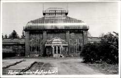 Foto Ak Wałbrzych Waldenburg Schlesien, Palmiarnia