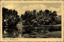 Postcard Dessau in Sachsen Anhalt, Teichpartie im Schillerpark, Vegetation