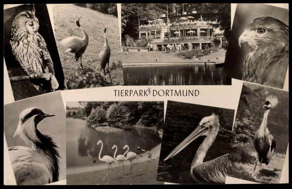 ansichtskarte postkarte dortmund tierpark flamingo storch eule terrasse. Black Bedroom Furniture Sets. Home Design Ideas