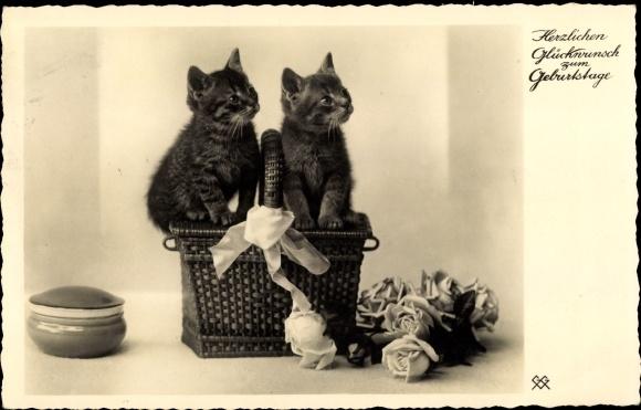 Postcard Gluckwunsch Geburtstag Zwei Kleine Katzen Auf Akpool Co Uk