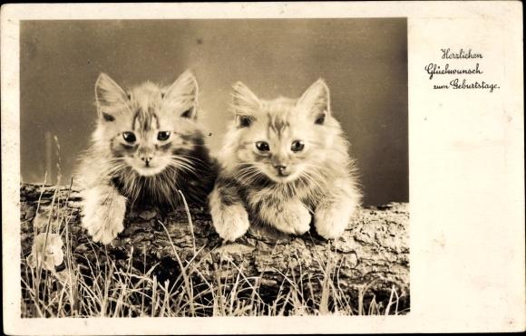Postcard Gluckwunsch Geburtstag Zwei Junge Katzen Auf Akpool Co Uk