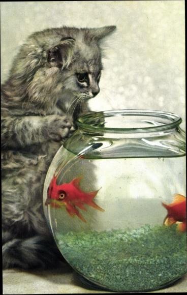 Kunstpostkarte Katze mit Goldfischen