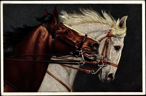 k nstler ansichtskarte postkarte koch a edle pferde nebeneinander. Black Bedroom Furniture Sets. Home Design Ideas
