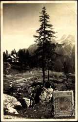 Postcard Gornja Radgona Slowenien, Partie auf dem Berg, Tanne