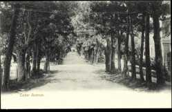 Ansichtskarte / Postkarte Bermuda, general view of the Cedar Avenue, trees