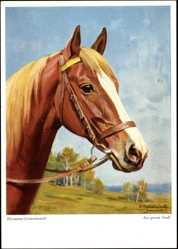 Künstler Ak Gemeinhardt, Hermann, Aus gutem Stall, Pferd