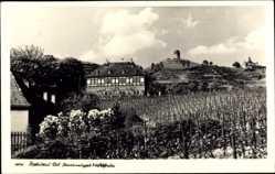 Ansichtskarte / Postkarte Radebeul im Kreis Meißen, Staatsweingut Hoflößnitz, Blick vom Feld