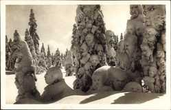 Ak Schneegeister im Walde, Schneegesichter, Winterlandschaft
