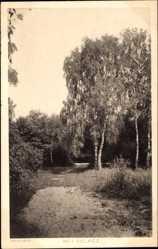 Ak Sołacz Poznań Posen Solatsch, Waldpartie, Junge Birken