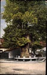 Lutherbaum