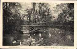 Goldene Brücke, Schwäne