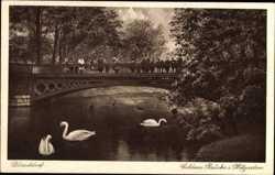 Brücke, Schwäne