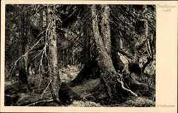 Brockenurwald